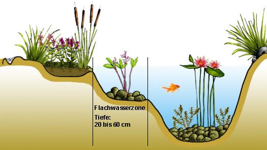 Flachwasserzone anlegen im gartenteich for Gartenteich anlegen pflanzen