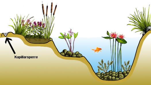 Teichrand und uferzone anlegen for Gartenteich ideen
