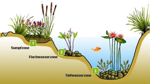 Gestaltung Gartenteich teichzonen im gartenteich anlegen teichbau infos